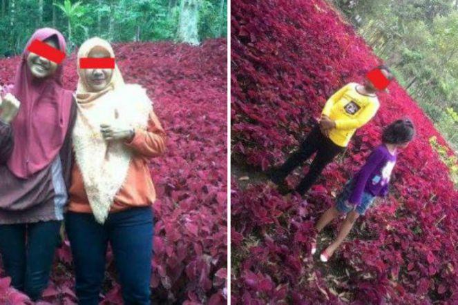 Diresmikan Megawati Taman Bunga Baturaden Jadi Korban Alayers Dirusak Pengunjung