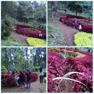 Diresmikan Megawati Taman Bunga Baturaden Jadi Korban Alayers Facebook Nasyit