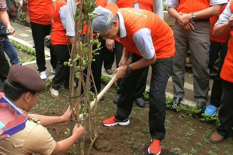 Dua Pohon Sakura Ditanam Kebun Raya Baturraden Kompas Gubernur Jawa
