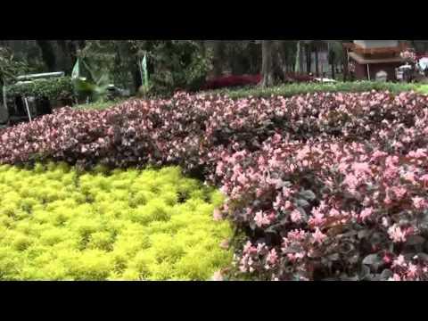 Indahnya Kebun Raya Baturaden Youtube Baturraden Kab Banyumas