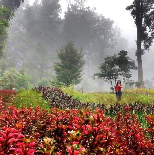Jalan Kebun Raya Baturaden Banyumas Jateng Bermalam Baturraden Kab