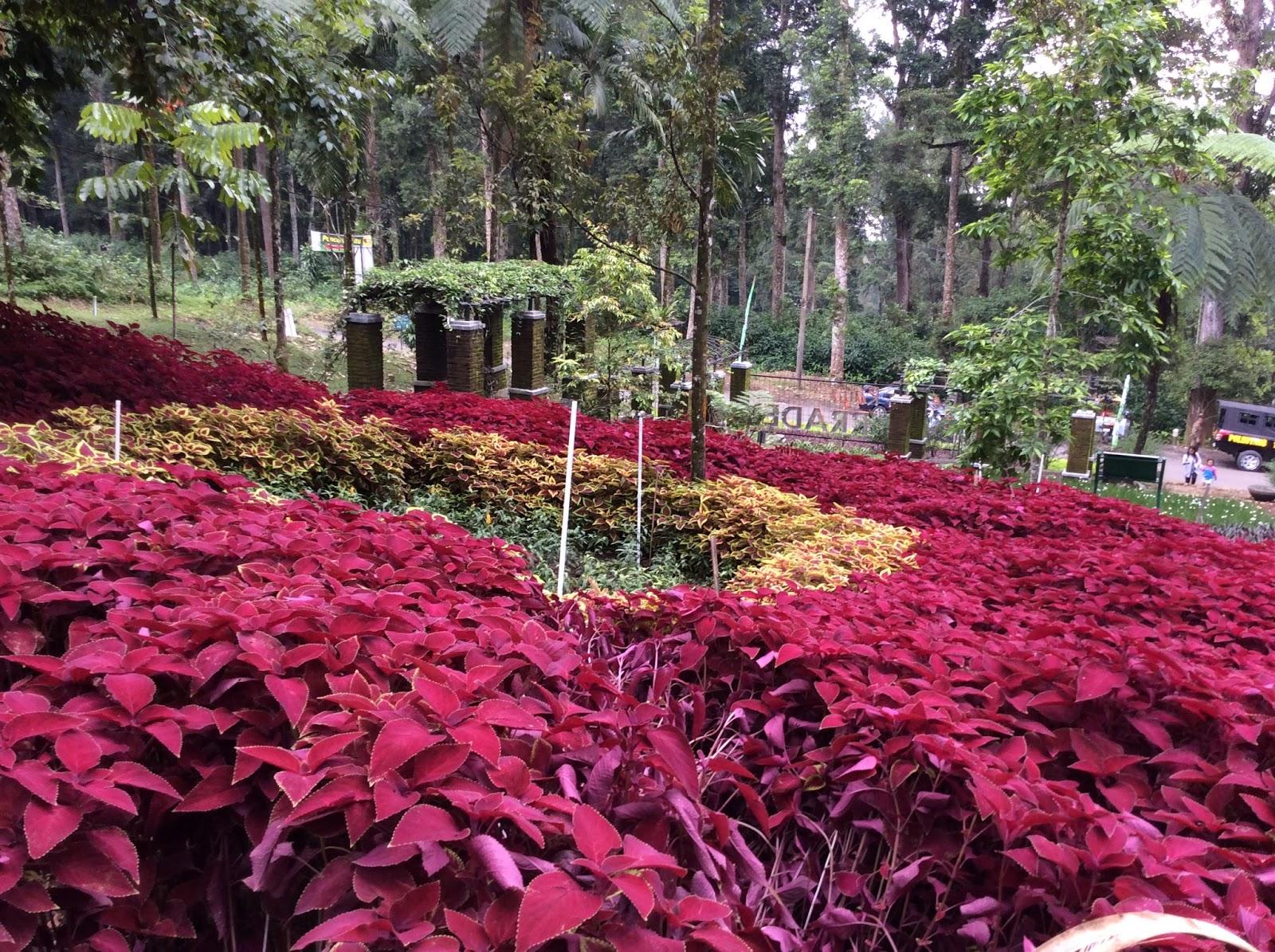 Jalan2 Yuk Kebun Raya Baturaden Purwokerto Jawa Tengah Biasanya Kelola