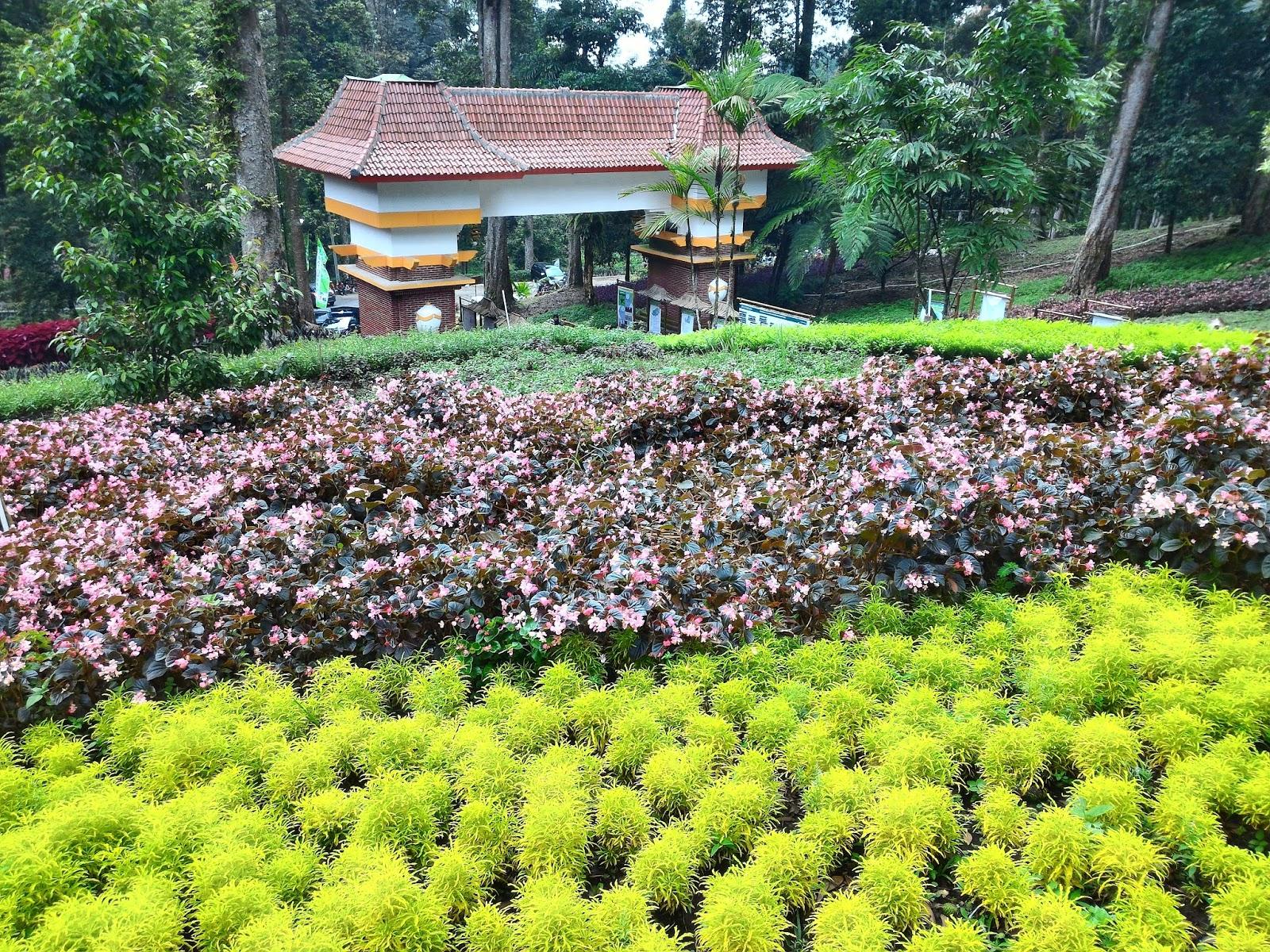 Jalan2 Yuk Kebun Raya Baturaden Purwokerto Jawa Tengah Mungkin Kurang