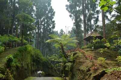 Kebun Raya Baturaden Taman Tanaman Pegunungan Jawa Alamendah Blog Baturraden