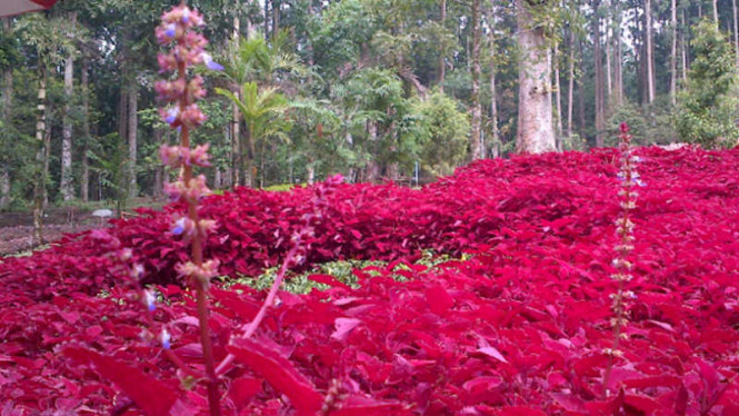 Kebun Raya Baturraden Lokasi Wisata Jawa Tengah Viva Image Title