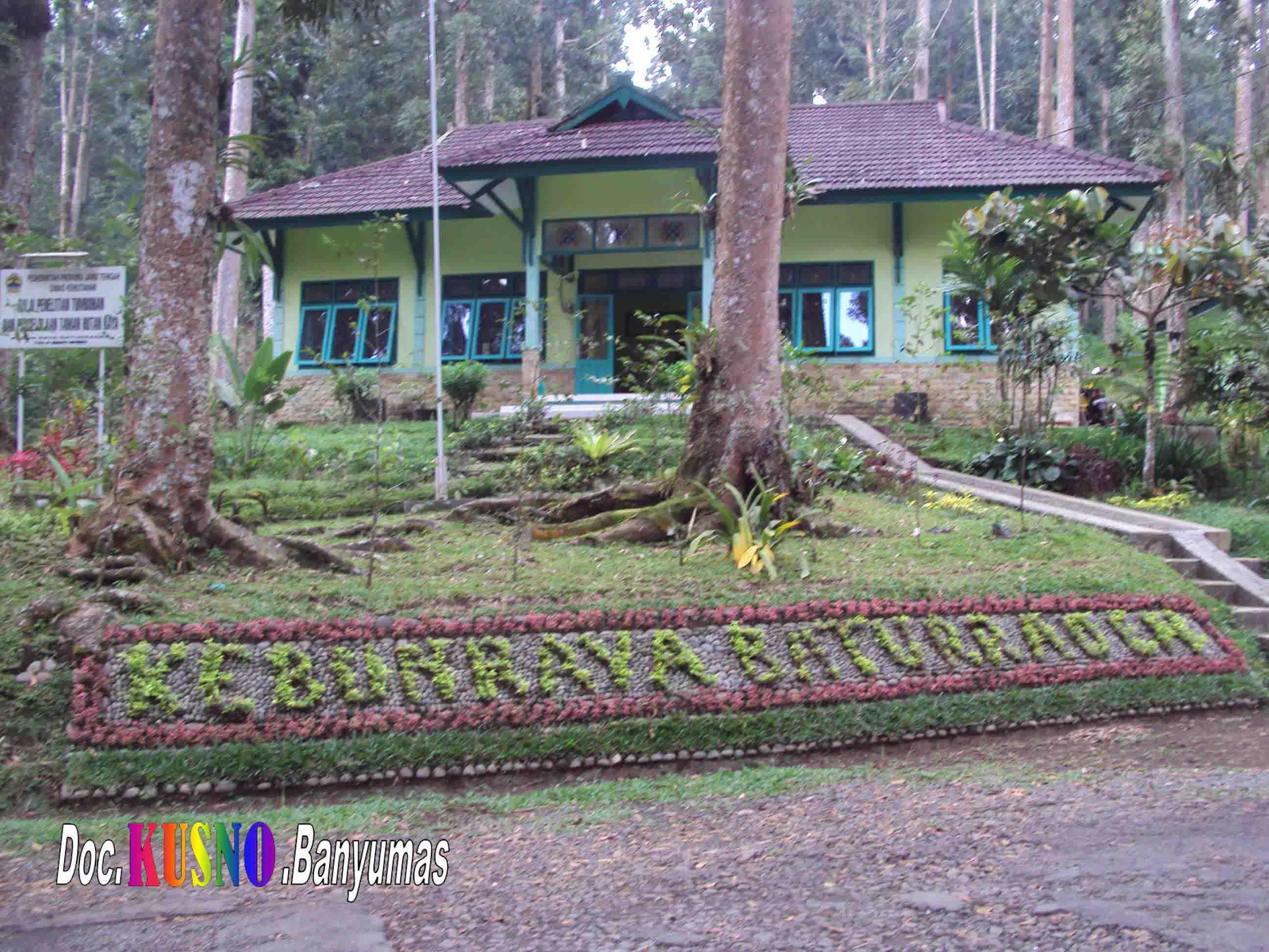 Kebun Raya Baturraden Maskusno Obyek Wisata Sekitar Baturaden Kab Banyumas