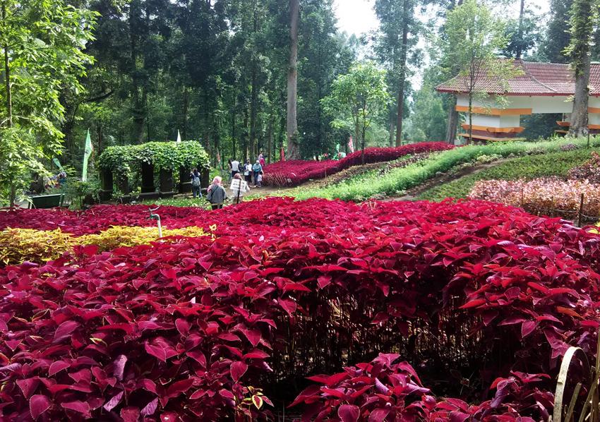 Koleksi Bunga Dimiliki Oleh Kebun Raya Baturraden Trend Memiliki Alamat