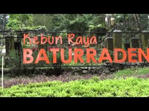 Launching Kebun Raya Baturaden Banyumas Youtube Baturraden Kab