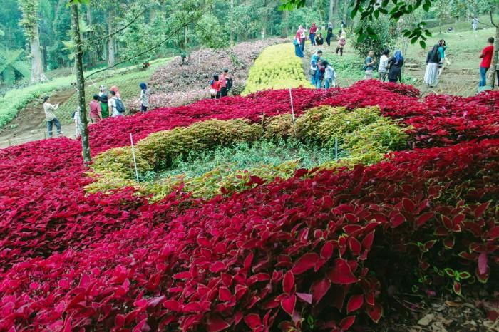 Obyek Wisata Kebun Raya Baturaden Banyumas Jateng Harga Tiket Masuk