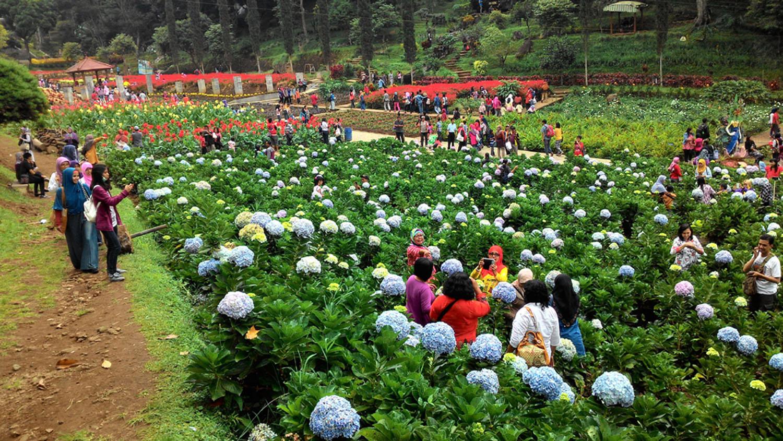 Obyek Wisata Kebun Raya Baturaden Banyumas Jateng Lokasi Baturraden Terletak