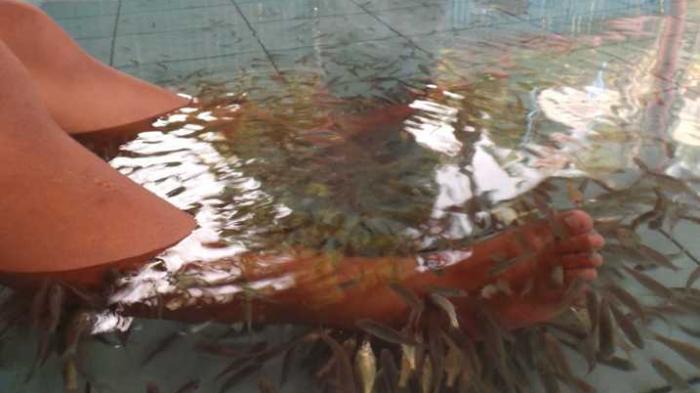 Lokawisata Baturaden Banyumas Menikmati Pemandian Air Panas Terapi Ikan Tribun