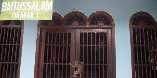 Kutukan Legenda Kera Masjid Saka Tunggal Banyumas Merdeka 2017 Kab
