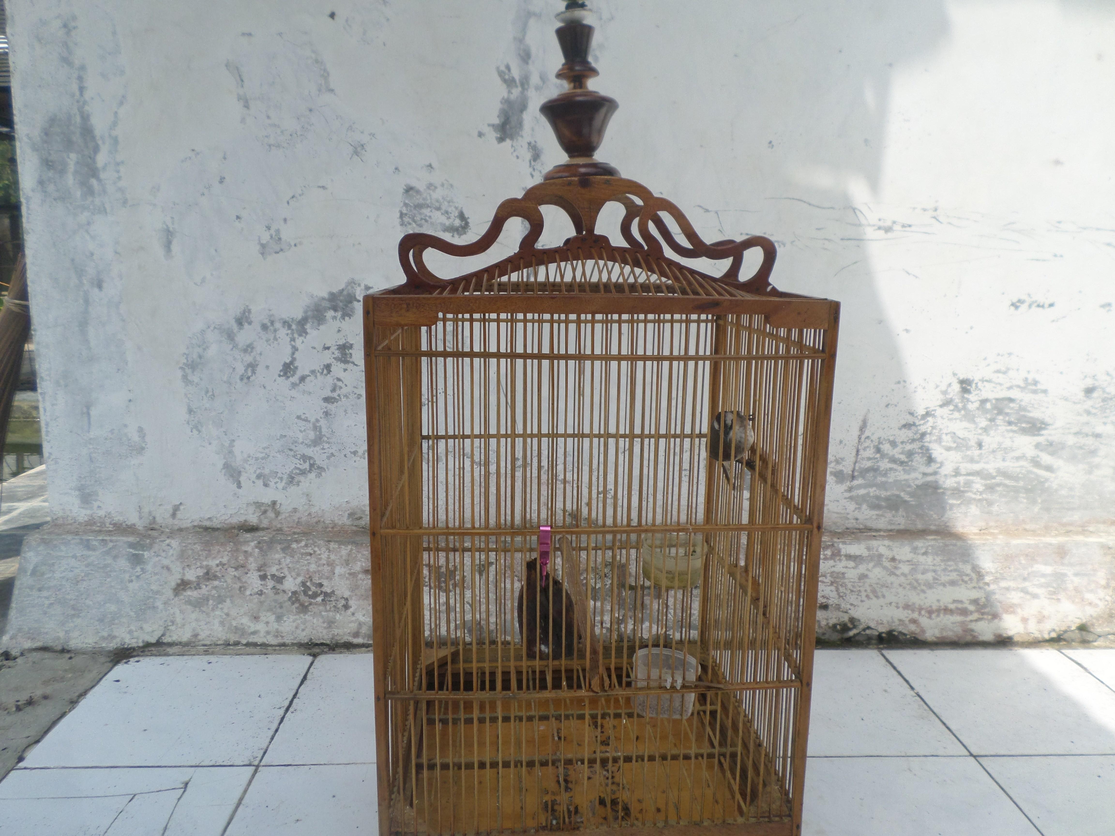 Sangkar Burung Gondrong Desa Dermaji Miniatur Rumah Raksasa Kab Banyumas