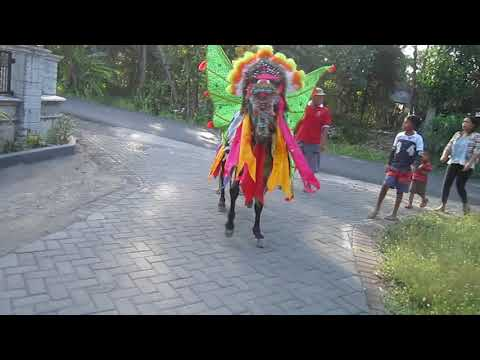 Sunatan Desa Pancoran Kab Banyuwangi Youtube