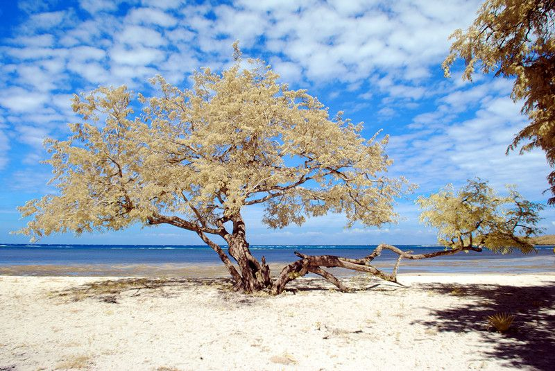 Beautiful Day Bama Beach Baluran National Park Banyuwangi East Pantai
