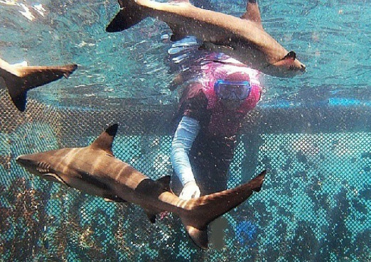 Bangsring Underwater Alfarizky Tour Travel Banyuwangi Bahkan Konon Wisata Menjadi