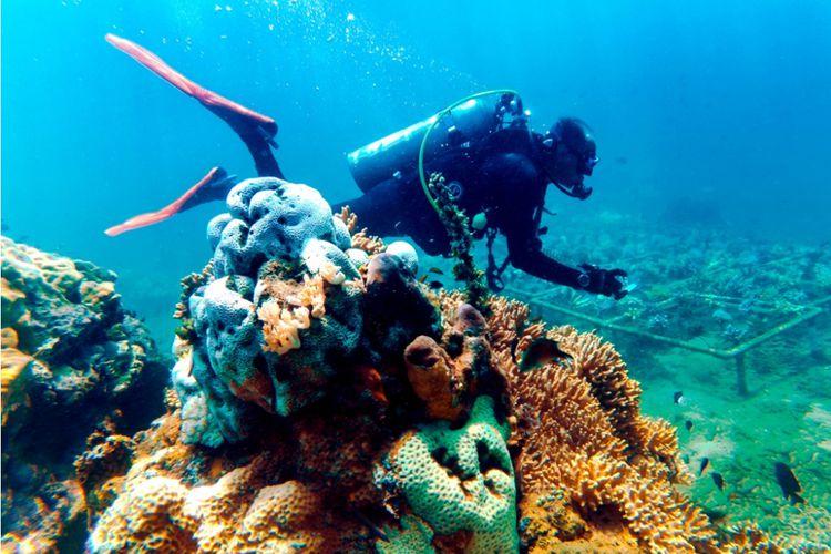 Banyuwangi Underwater Festival Gandrung Menari Dasar Laut Kabupaten Menggelar Pantai