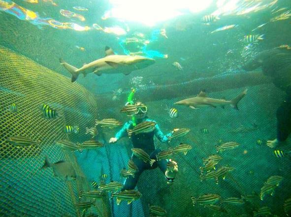 Destinasi Jalan Menuju Pantai Bangsring Underwater Banyuwangi Berenang Ikan Hiu