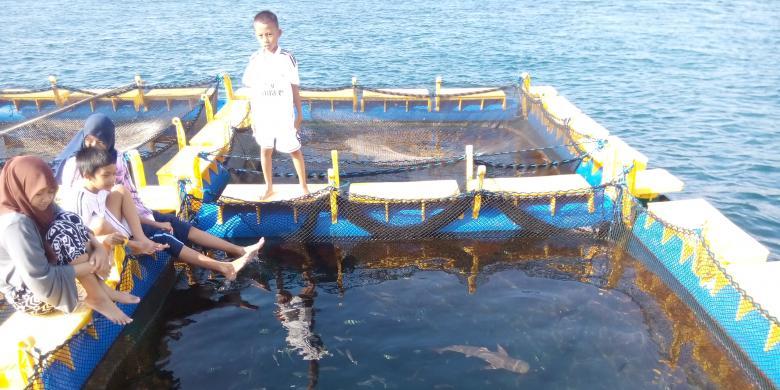 Melancong Bangsring Snorkeling Sampai Berenang Wisatawan Melihat Anakan Ikan Hiu