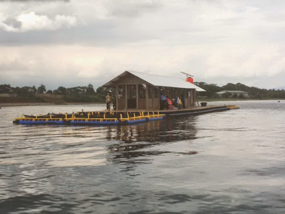 Menikmati Eksotisme Bawah Laut Pantai Bangsring Banyuwangi Bagus Rumah Apung