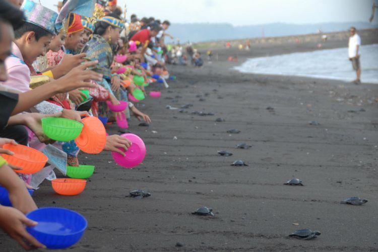 Banyuwangi Merdeka Peringati Sumpah Pemuda Ratusan Selamatkan Penyu Pantai Boom
