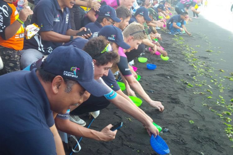 Banyuwangi Merdeka 100 Pebalap Peserta Itdbi Lepas Tukik Bareng Pantai