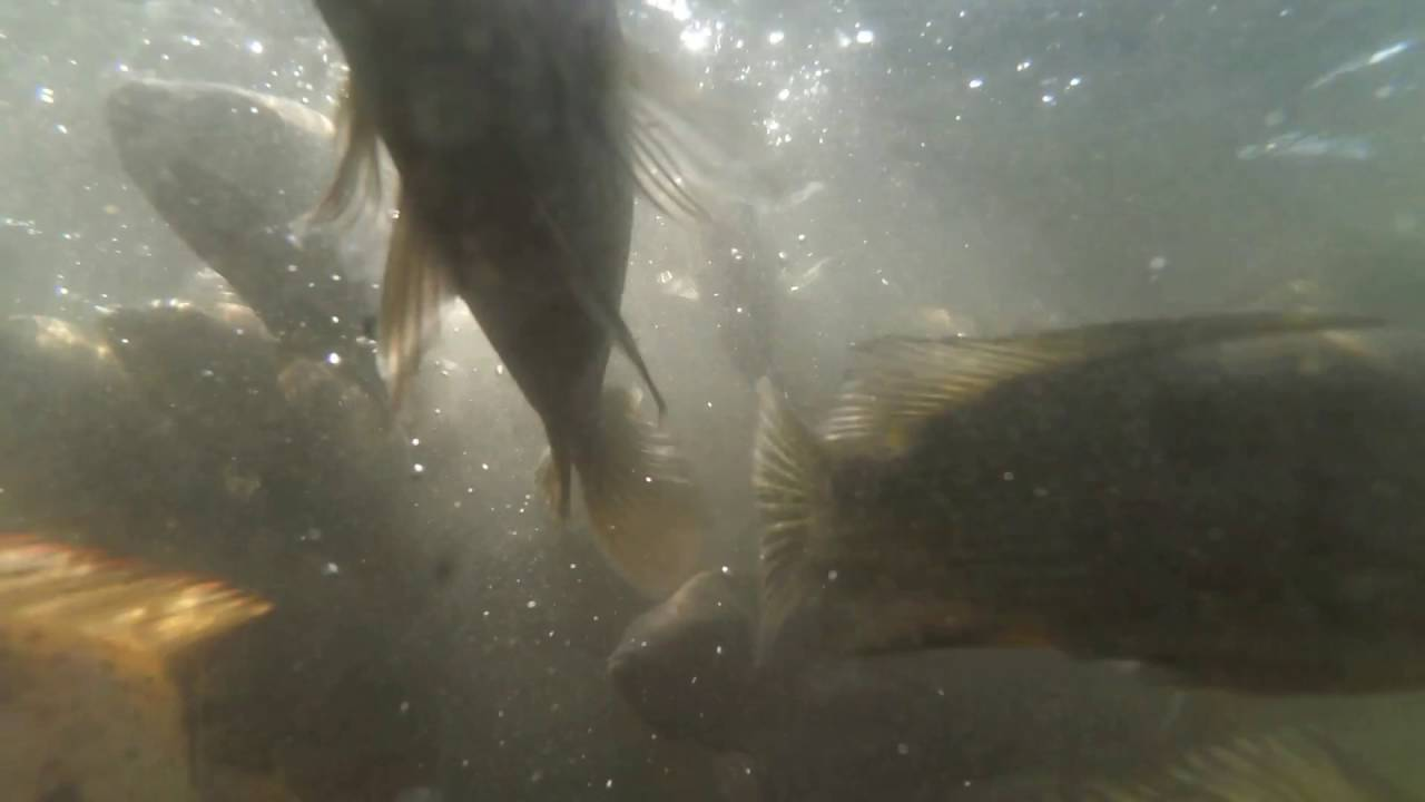 Kolam Ikan Pantai Cacalan Banyuwangi Youtube Kab