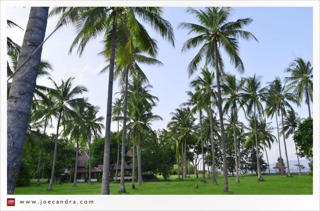 Pantai Cacalan Alternatif Destinasi Wisata Keluarga Banyuwangi Pohon Kelapa Joecandra