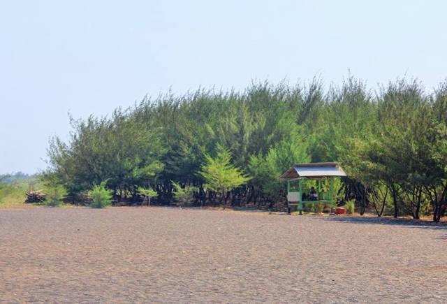 10 Gambar Pantai Cemara Banyuwangi Jawa Timur Jalan Menuju Hamparan