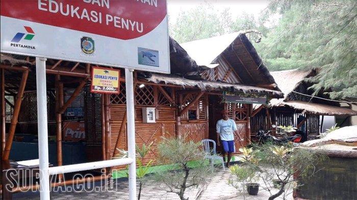 Desa Balik Konservasi Pantai Banyuwangi Surya Cemara Kab