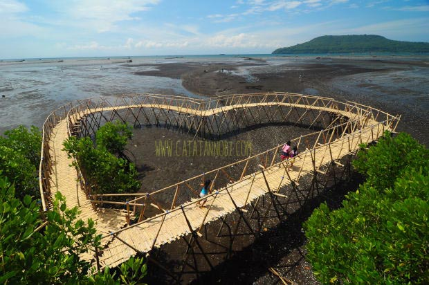 Jembatan Anti Galau Hutan Mangrove Kawang Pantai Cemara Cinta Muncar