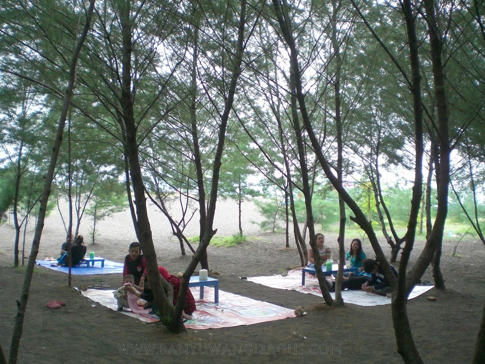 Lorong Hutan Pantai Cemara Banyuwangi Bagus Berada Bawah Pohon Rindang