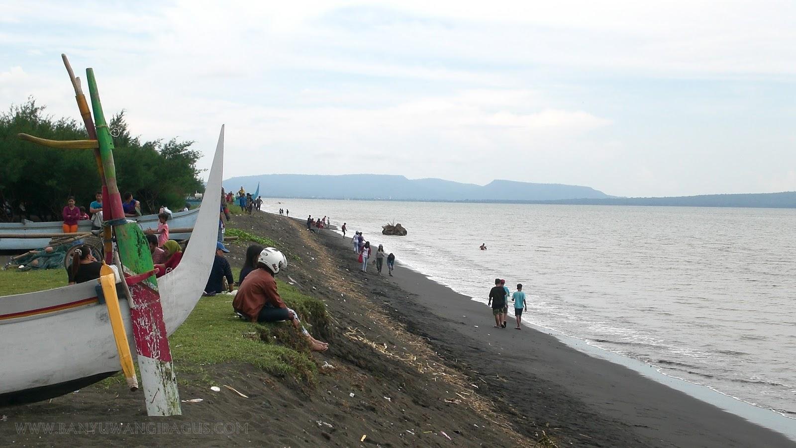 Lorong Hutan Pantai Cemara Banyuwangi Bagus View Selat Bali Lokasi