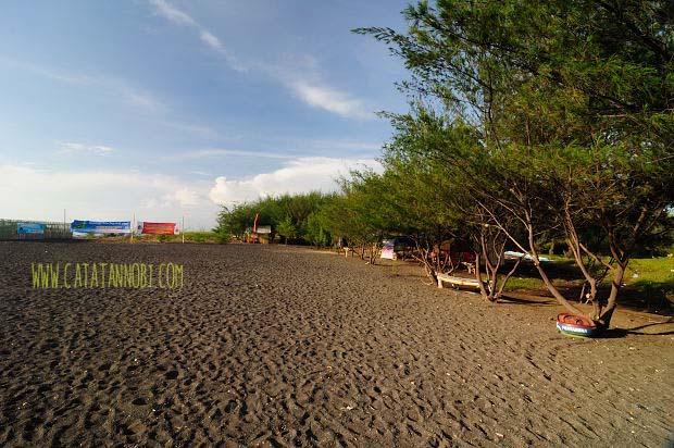 Pantai Cemara Banyuwangi Keunikan Lorong Hutan Pasir Cukup Luas Bermain