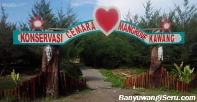 Pantai Cemara Cinta Mangrove Kawang Muncar Banyuwangi Versi 2 Sebelumnya