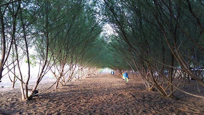Pantai Cemara Menilik Obyek Wisata Banyuwangi Tempat Id Sesuai Namayna
