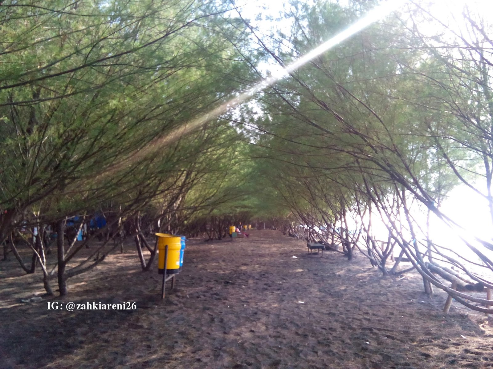 Wajah Pantai Cemara Banyuwangi Hutan Follow Instagram Zahkiareni26 Kab