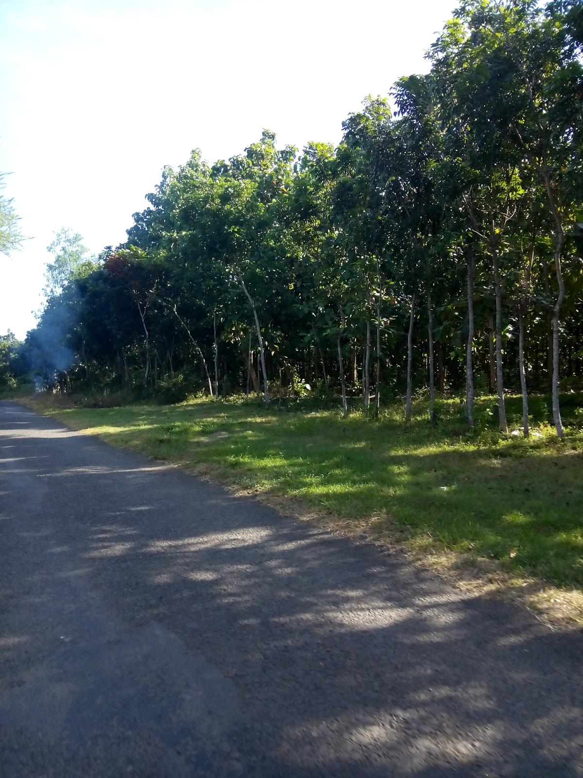 Ekologi Wisata Pesona Pantai Lampon Pesanggaran Kabupaten Banyuwangi Pariwisata Memiliki