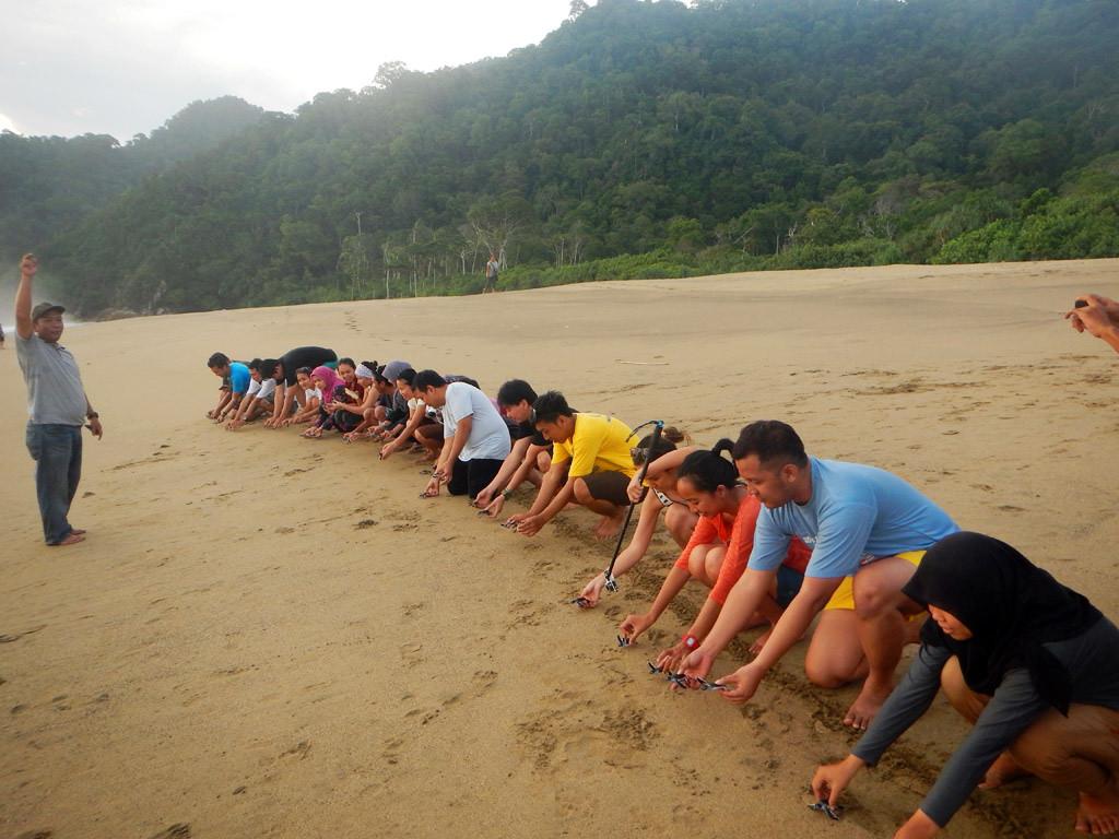 Inilah 10 Pantai Banyuwangi Wajib Dikunjungi Explore Pelepasan Tukik Sukomade