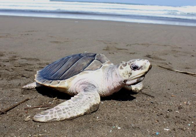 3 Pantai Banyuwangi Mempesona Informasi Unik Menarik Ngagelan Terletak Sebelah