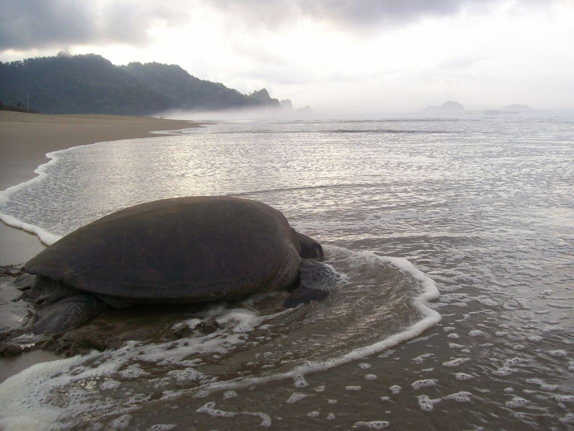 April 2016 Anjanapoliwangi Berada Kawasan Taman Nasional Meru Betiri Tnmb
