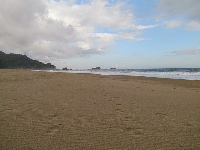 Pantai Sukamade Kumoro Medium Taman Nasionalmeru Betiri Dikenal Sebagai Surganya
