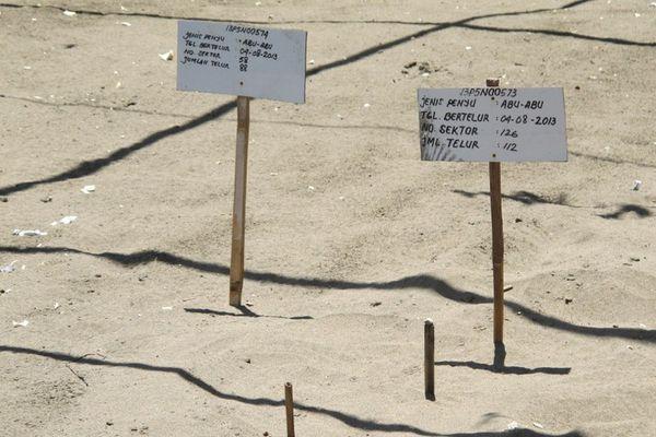 Sunrise Java Pantai Ngagelan Tempatnya Bayi Penyu Lucu Pengkaran Terawat