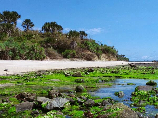 Berwisata Taman Nasional Alas Purwo Banyuwangi Bagus Pantai Parang Ireng
