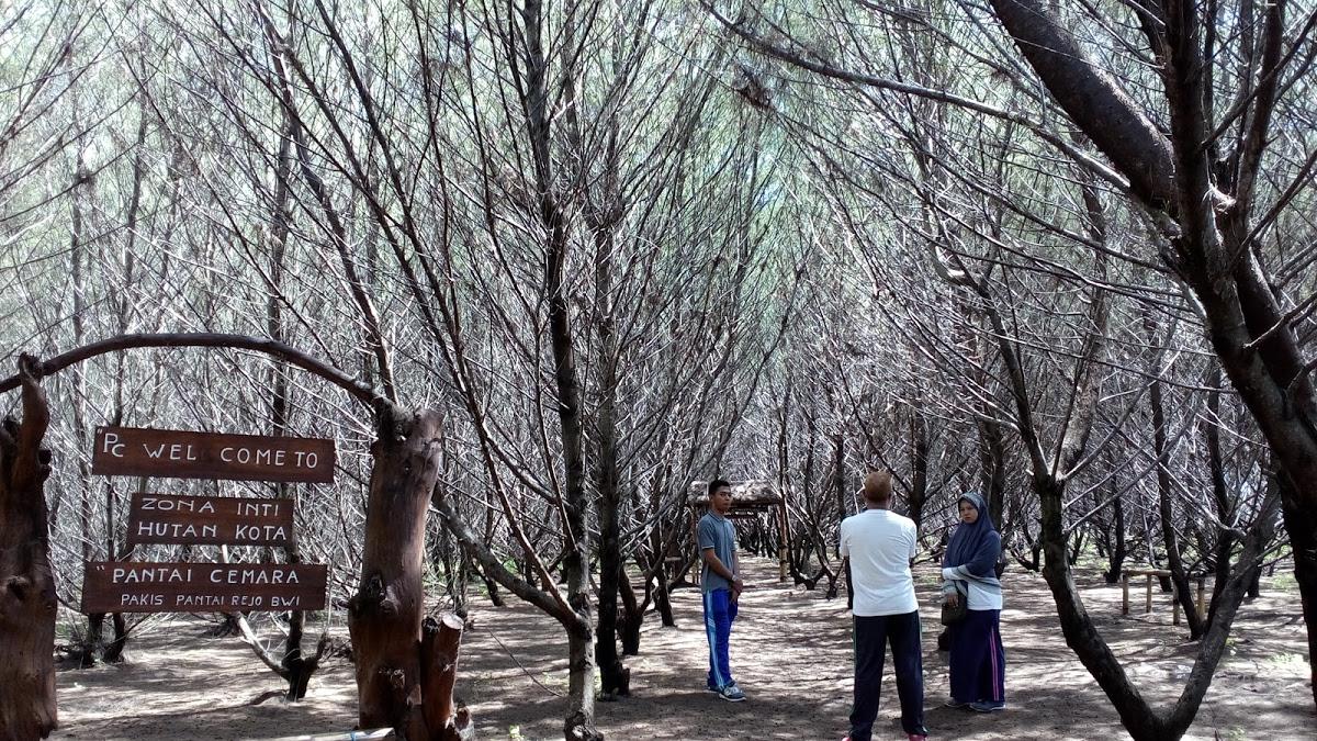 Pantai Cemara Banyuwangi Top Zona Inti Hutan Kota Parang Ireng