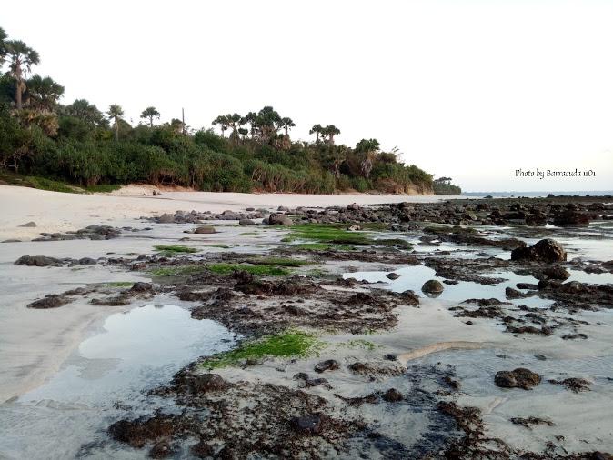 Pantai Pancur Taman Nasional Alas Purwo Banyuwangi Top Pesisir Parang