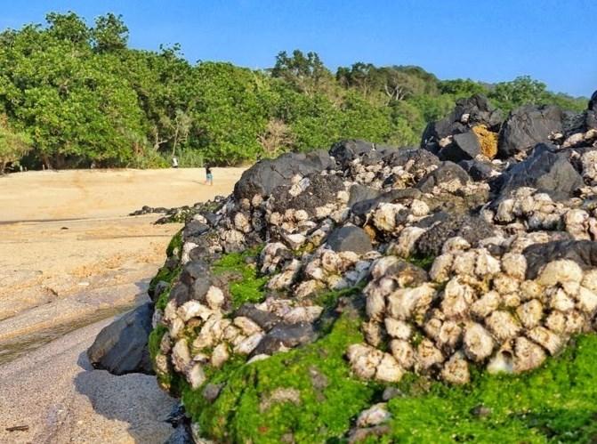 Pantai Parang Ireng Jamrudnya Banyuwangi Kab