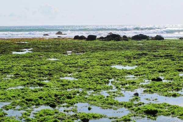 Pantai Parang Ireng Tiga Warna Banyuwangi Bagus Bibir Pantainya Terdapat