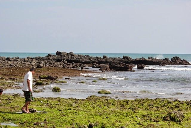 Pantai Parang Ireng Tiga Warna Banyuwangi Bagus Diperhatikan Lumut Hijau