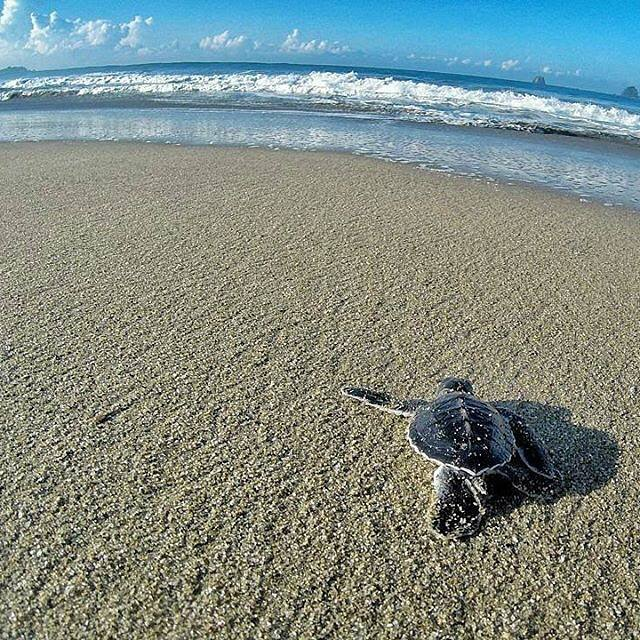 Explore Wisata Pantai Sukamade Rumah Penyu Banyuwangi Catatan Kabupaten Kab